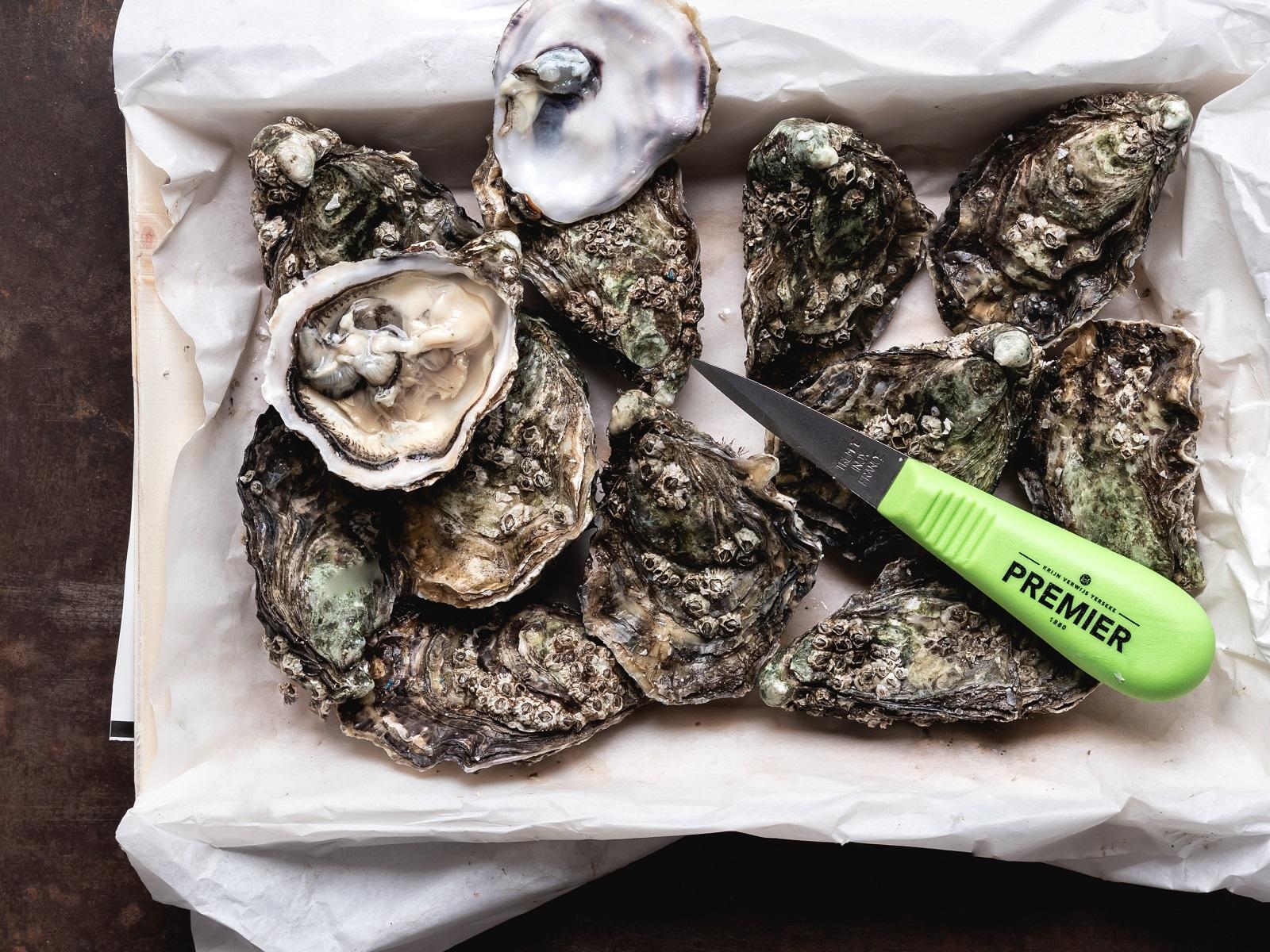 Hoe bewaar je oesters?
